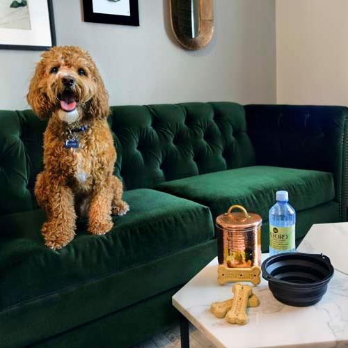 Pet Friendly Suite