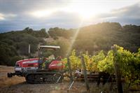 Harvest morning at Alta Colina Estate Vineyard
