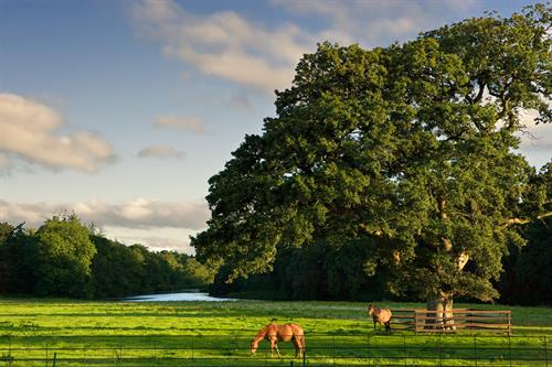 Gallery Image Castlemartyr-Resort-Horses_Tree_Lake.jpg