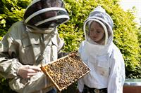 TELUS International Ireland introduces beehives at Cork campus to mark World Bee Day