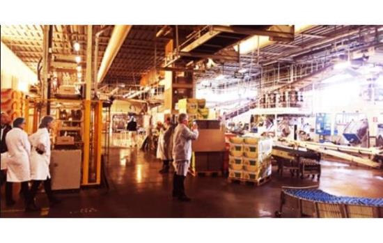 Manufacturing, Production & Wholesale