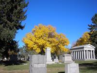 Ash Tree in Autumn, Block A