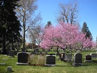 Eastern Redbud in Spring over Emily Griffith's Headstone, Block 61