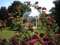 Fairmount Heritage Roses and Gazebo in Summer, Block 85