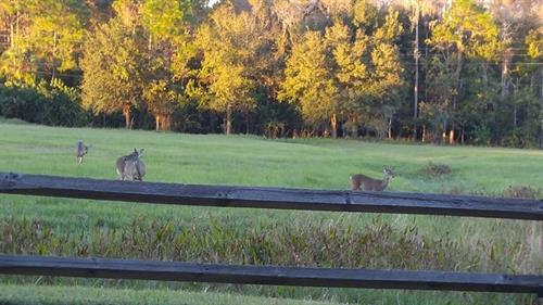Eastlake Woodlands Wildlife
