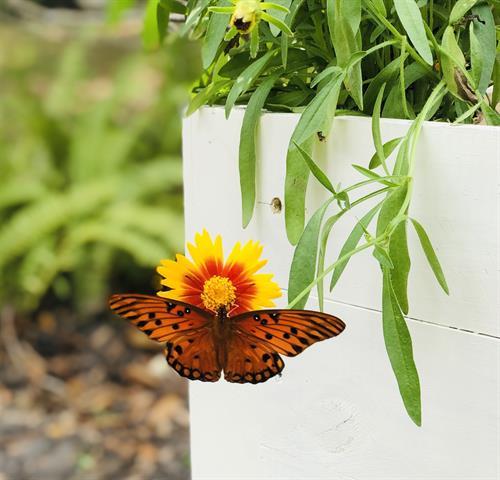 Garden Bed Pollinators