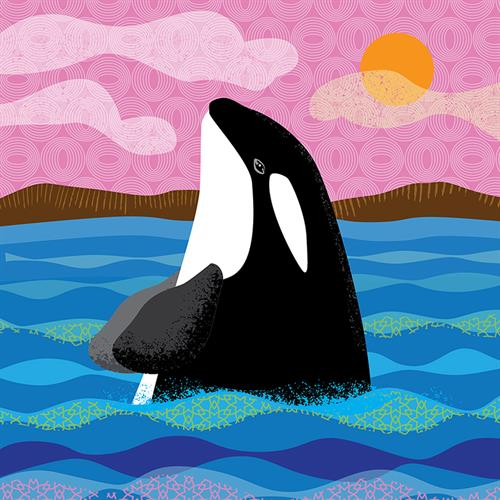 Wild Wonder orca