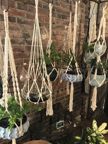 Houseplants at Herban Bloom