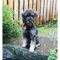 """Rescue Dog """"Fleur"""" Runs for Unofficial Mayor in Support of VIPP"""