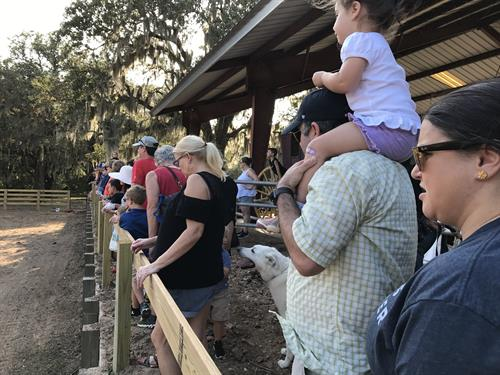 Crowd watching the sheep herding demo with Trainer Joy Hall