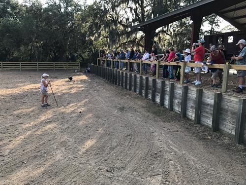Crowd watching Trainer Joy Hall during sheep herding demo