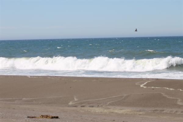 Gallery Image Beach.JPG
