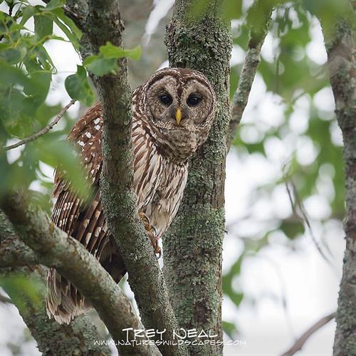 Resident wildlife at Hagerman NWR