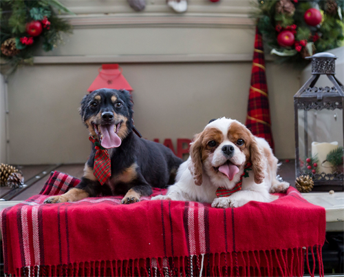 Gallery Image dogs_at_Christmas.PNG