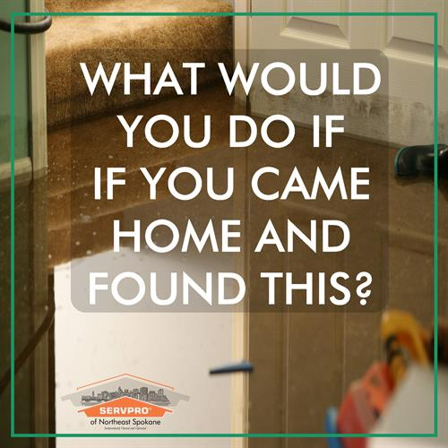 What would you do if you came home and found this?