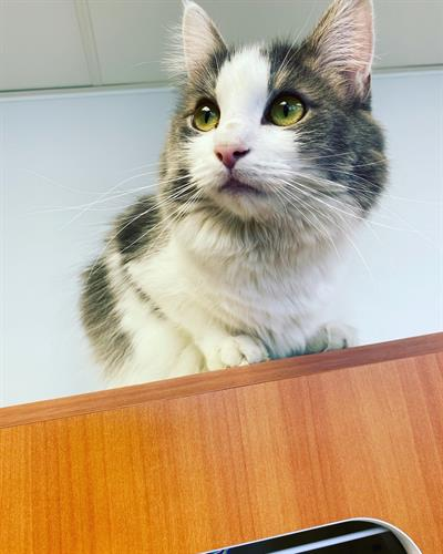 Cora SPCA Cat Room