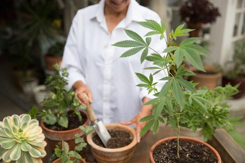 Cannabis is a She and She wants to always help-