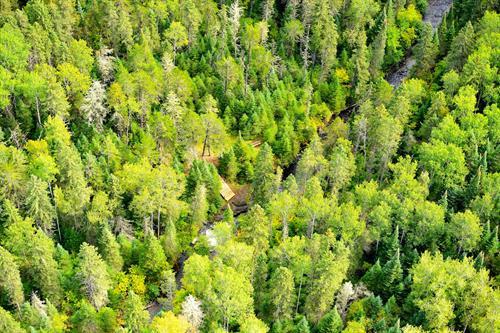 Cedar Falls Conservation Area