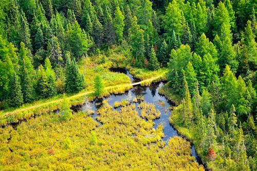 Mills Block Forest