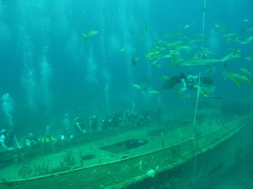Gallery Image Shark_feed_on_the_Austin_Smith.jpg