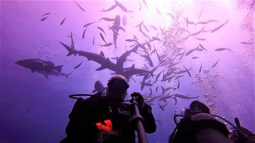 Gallery Image Underwater_selfie.jpg