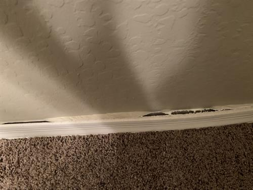 water damage baseboard pulling away from wall.