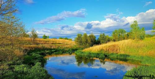 Tear Drop Pond by T Collins