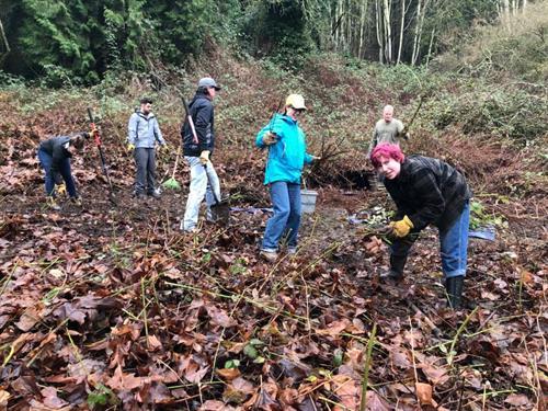 Volunteer work party with UW-REN (Restoration Ecology Network) team