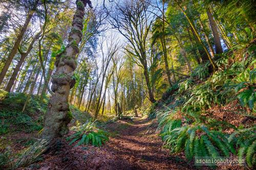 Spring in the North Creek Forest.  Photo credit: Ascanio Photography