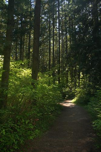 Gallery Image forest_path_giveBIG2018.jpg