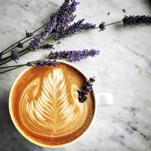 Lavender Latte (Seasonal)