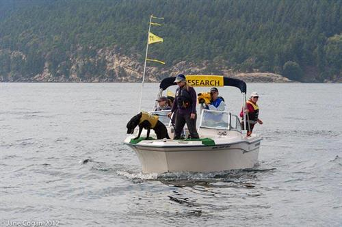 UW Research - tracking orca scat.