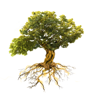 Gnarled Oak Coaching Services - Kenmore