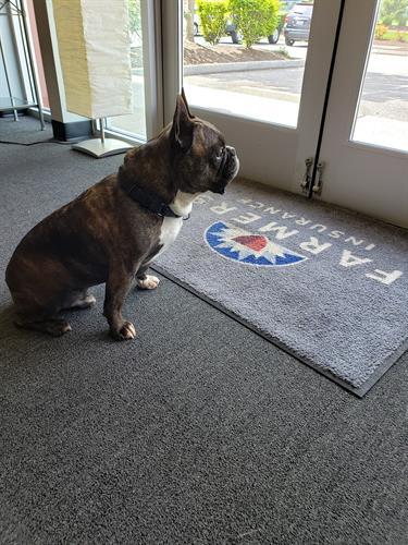 Meet Jax - The office Mascot