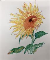Wonderful Watercolor @ Kenmore Branch-Northshore Senior Center