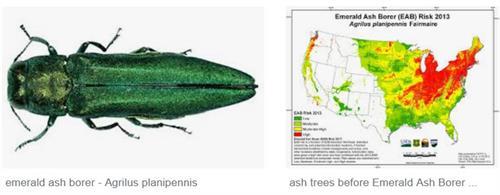 Invasive Species education