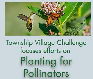Gallery Image Pollinators.JPG