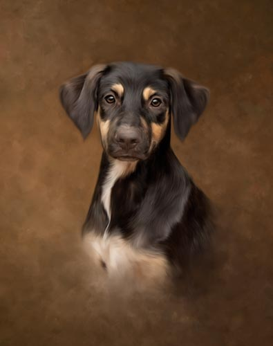 Painted Portrait - Dog