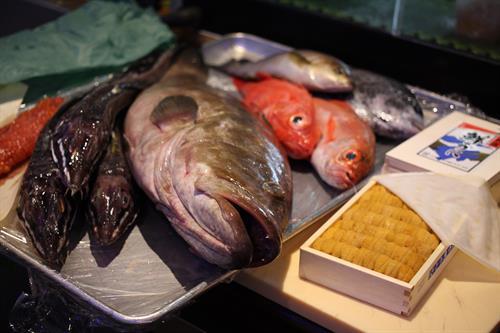 Fish flown in from toyosu market, Japan daily
