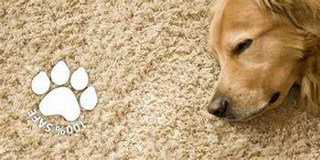 Gallery Image Pets.jpg
