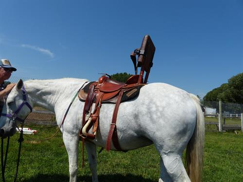 Our Special needs saddle on Whoopi