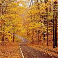 Street View in Autumn