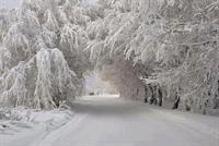 Street View Winter