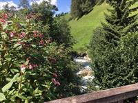 Alpen Beauty!