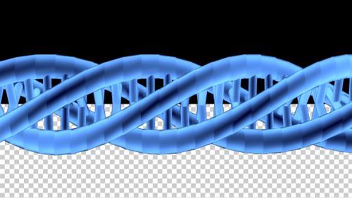 Gallery Image DNA_Strand_3_D.jpg
