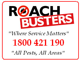 Gallery Image roach-busters-pest-control-services-australia-pest-control-c63c-300x0.jpg