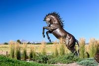 Flying Horse Community