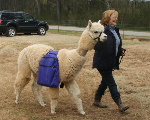 Karen and alpaca bring the the wine to celebrate planting.