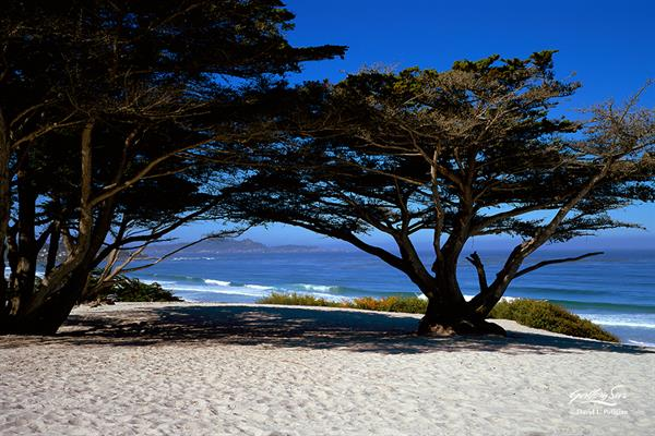 Carmel Beach Morning Photograph by David Potigian of Gallery Sur