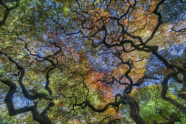 Tree of Life Photograph by Gary Geiger of Gallery Sur